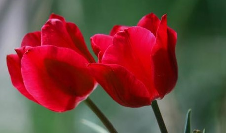 أزهار-و-ورود