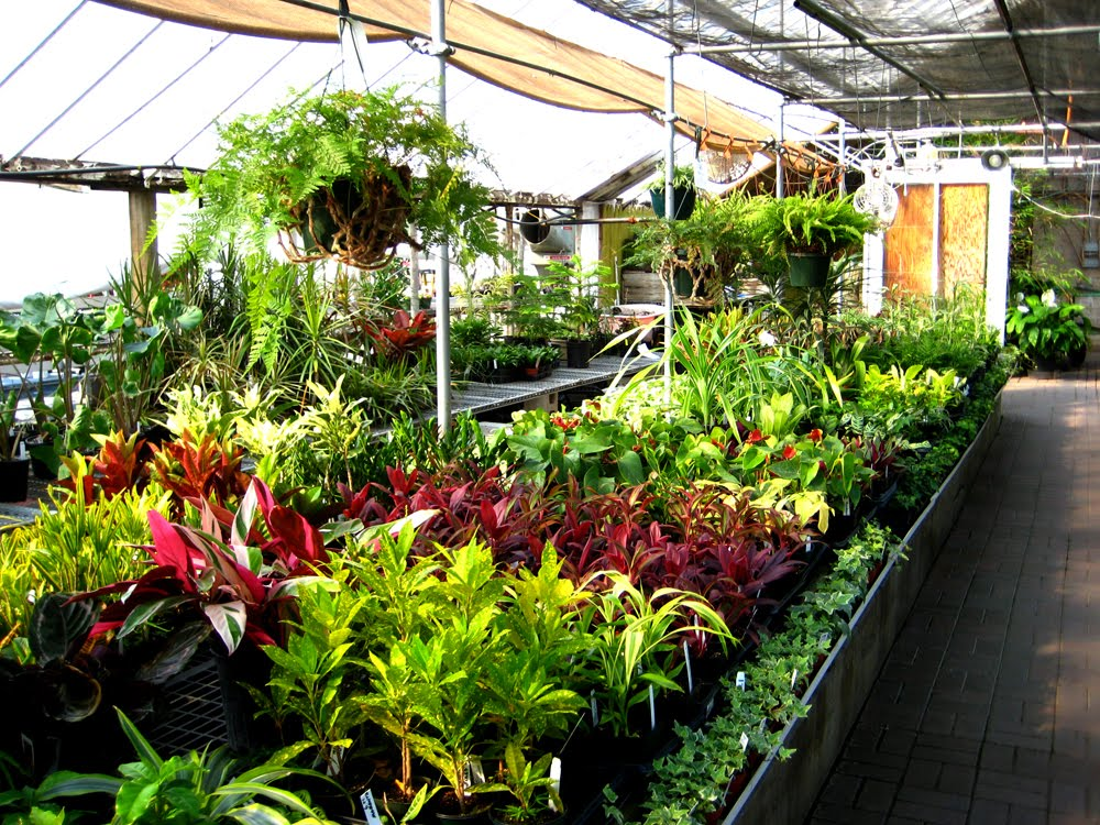 nurseries-for-plants