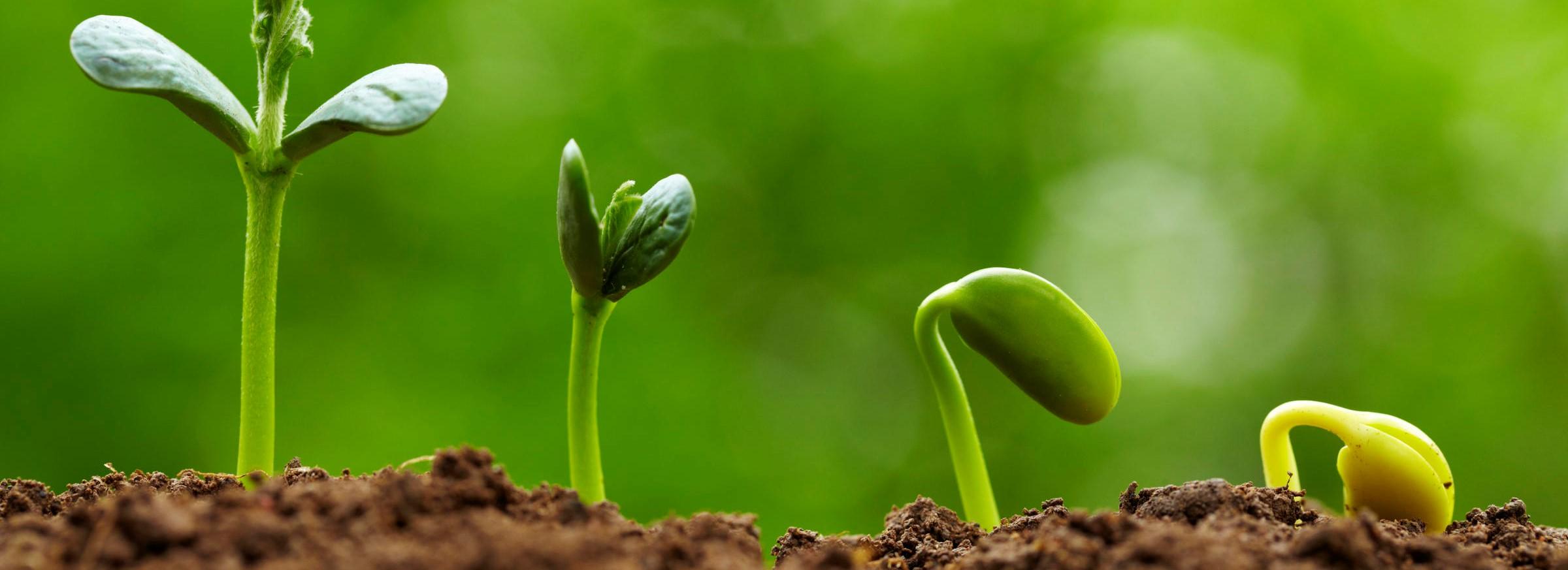 نباتات , - اعلن مجاناً في منصة وموقع عنكبوت للاعلانات المجانية المبوبة|photos/2018/03/slider1-plants.jpg