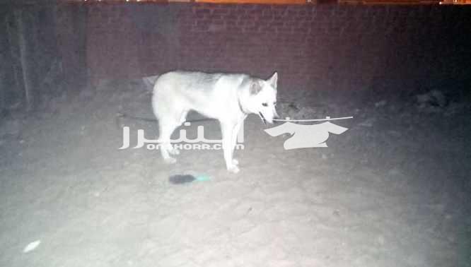 - كلب للبيع <br> <br>كلب للبيع اليف ولطيف جدا