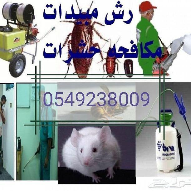 شركة المنارة لمكافحة الحشرات ورش المبيدات مع الضمان 0549238009