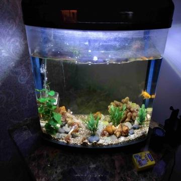 -                          حوض سمك حجم 10 جالون للبيع مع اكسسوارات...