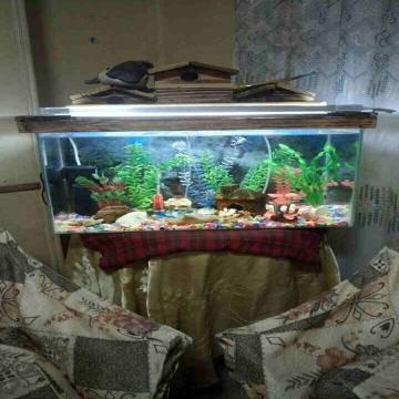 -                          حوض سمك 60...