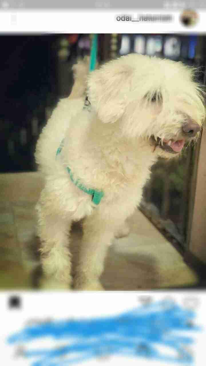 labrador retriever black and brown jack-  كلب فرنجي لا تنسَ أنك...