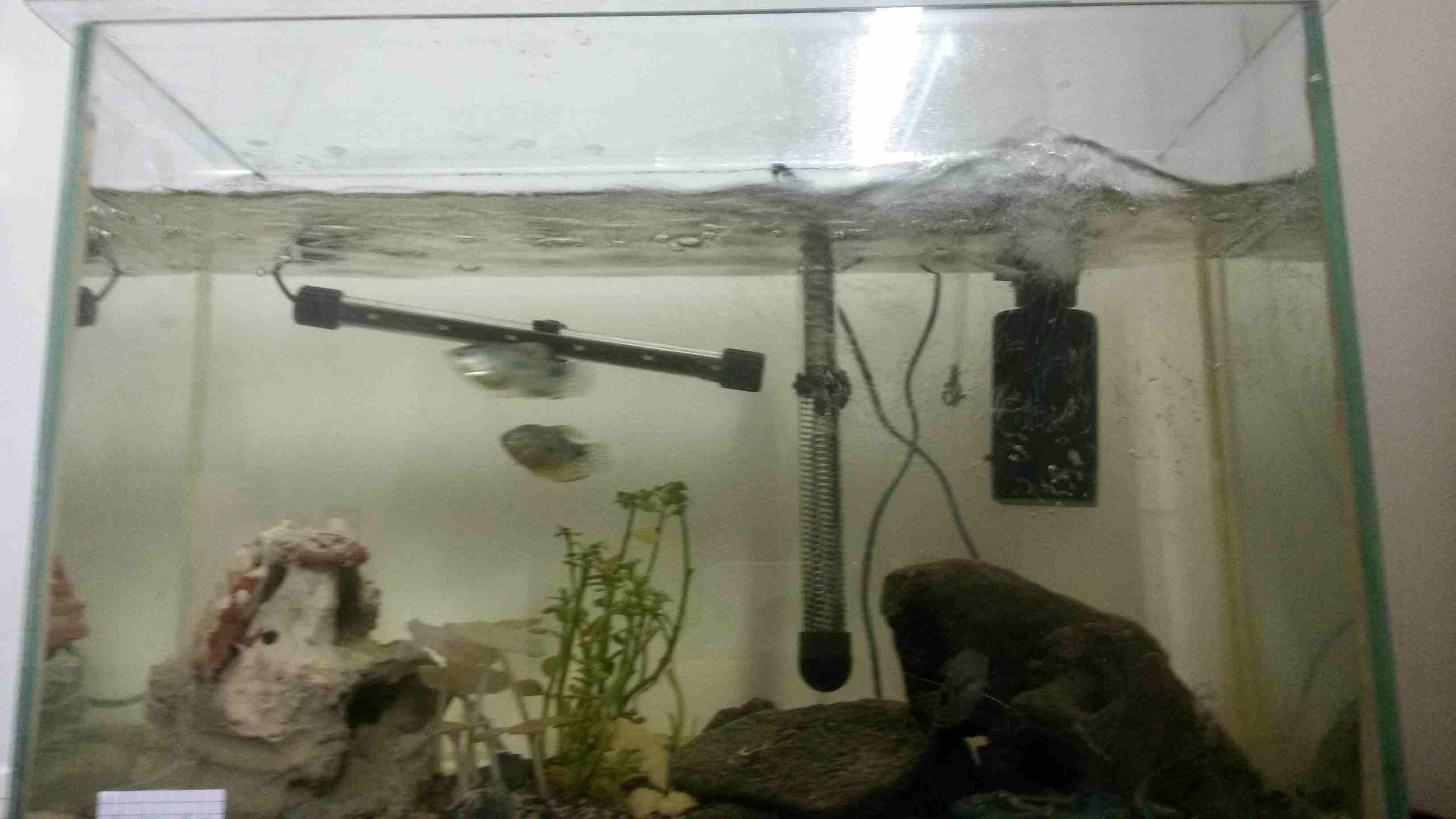 حوض سمك مع السمك...