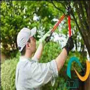 - اجا الصيف .. عمال لتزبيط الحدائق والشجر الضار واصلاح ماهو تالف...
