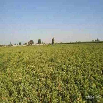 - 5 فدان منزرعين ومقننين على طريق مرصوف يمر به خط مياه الشرب...