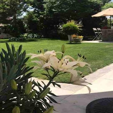 نباتات , - اعلن مجاناً في منصة وموقع عنكبوت للاعلانات المجانية المبوبة- - لتنسيق الحدائق و المظلات والشلالات 0562409023