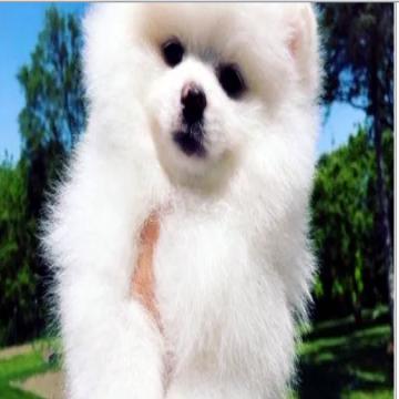 كلاب مستورده للبيع باسعار منافسه- - كلاب مستورده للبيع ( ميزتنا في اسعارنا) كل الكلاب موجوده باسعار...