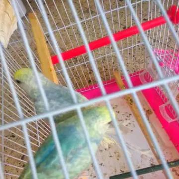 حيوانات , - اعلن مجاناً في منصة وموقع عنكبوت للاعلانات المجانية المبوبة- - قص رينبو سكاي بلو جولدن أول شغل مع بعض الصور في ضوء الشمس